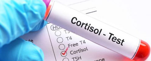 Cortisol 500x204 1